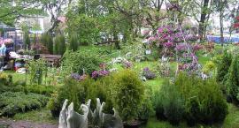 Kwiaty Ogrodów w niedzielę w Gołotczyźnie