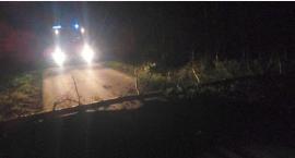 Powiało w pow. ciechanowskim. Powalone drzewa blokowały drogi