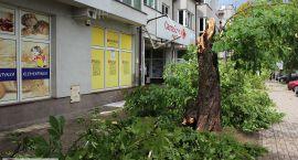 Aktualności Wichura nad Ciechanowem: połamane drzewa, uszkodzone dachy (zdjęcia)