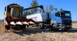 Lokalni rolnicy zaufali Cedrobowi. Sprzedali spółce rekordową ilość kukurydzy